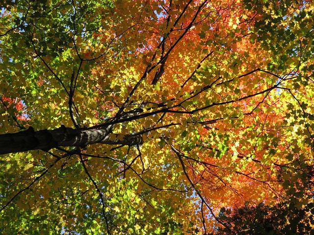 fall-1021535_640