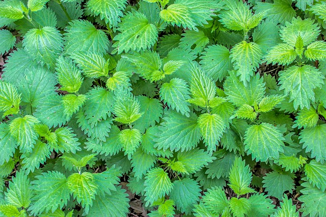 plant-3341475_640